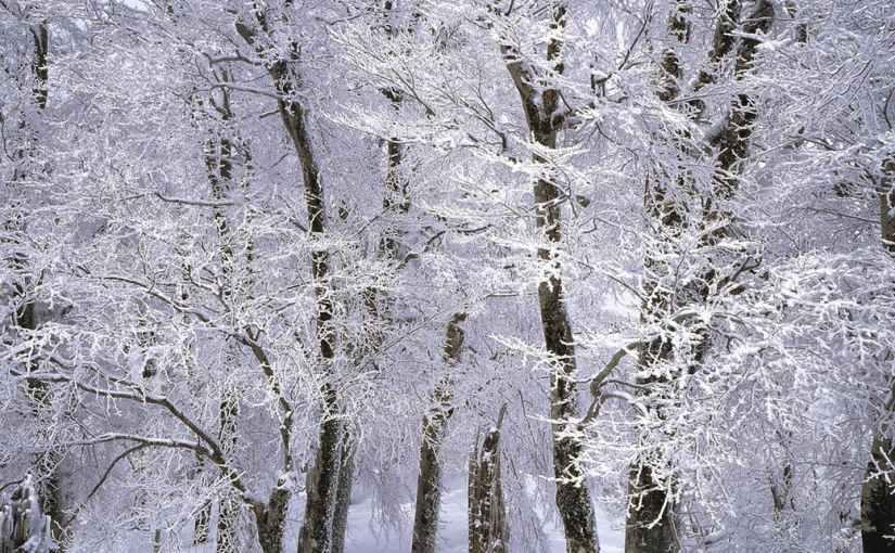 La neige, qu'on voit danser…